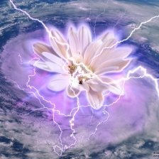 Hurricane Flower